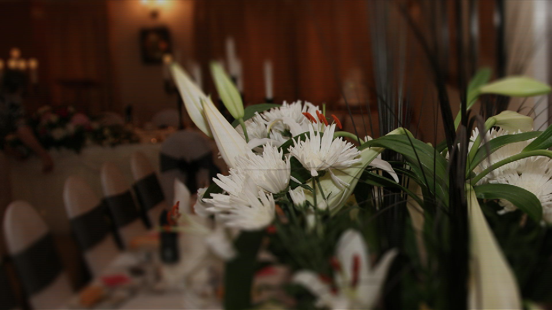 Wedding Northern Ireland - The SHepherds Rest Pub - Draperstown
